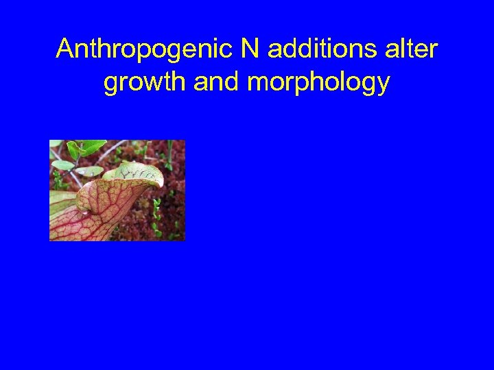 Anthropogenic N additions alter growth and morphology