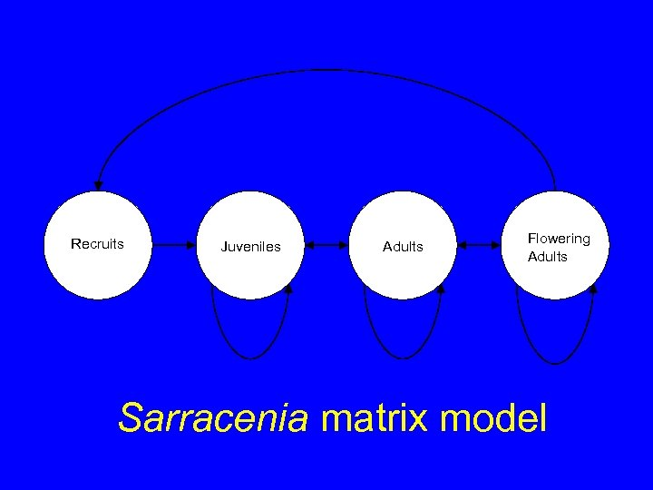 Recruits Juveniles Adults Flowering Adults Sarracenia matrix model