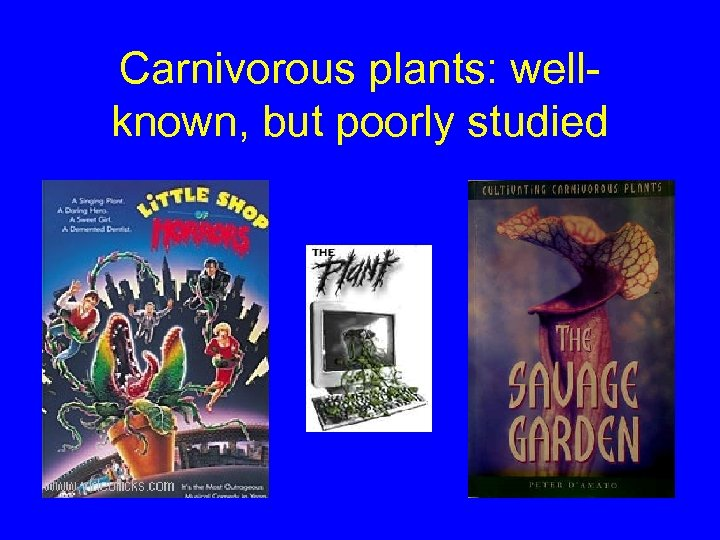 Carnivorous plants: wellknown, but poorly studied