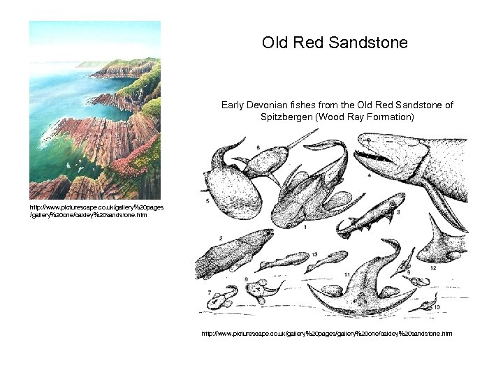 Old Red Sandstone Early Devonian fishes from the Old Red Sandstone of Spitzbergen (Wood