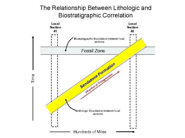 The Relationship Between Lithologic and Biostratigraphic Correlation Local Section #1 Local Section #2 Biostratigraphic