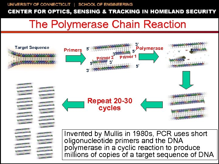 The Polymerase Chain Reaction Target Sequence Primers 5' 3' 3' Polymerase 5' 3' r