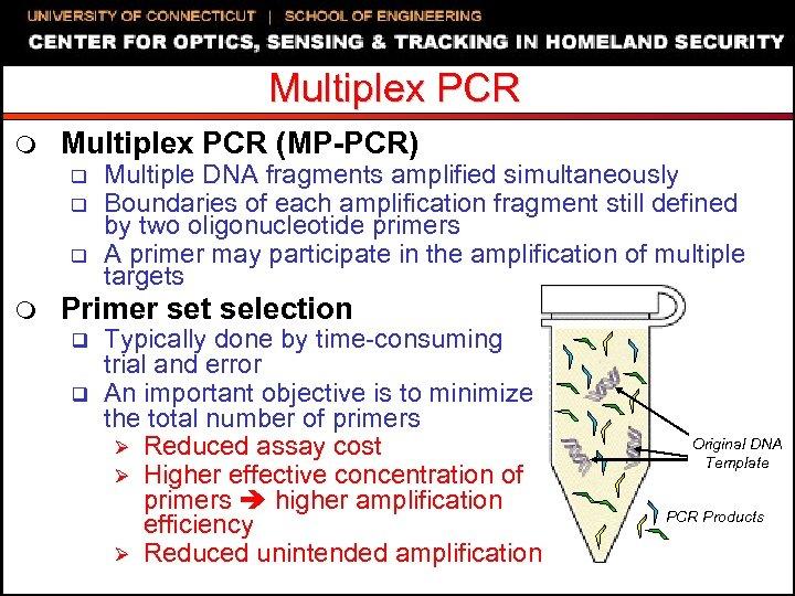 Multiplex PCR m Multiplex PCR (MP-PCR) q q q m Multiple DNA fragments amplified