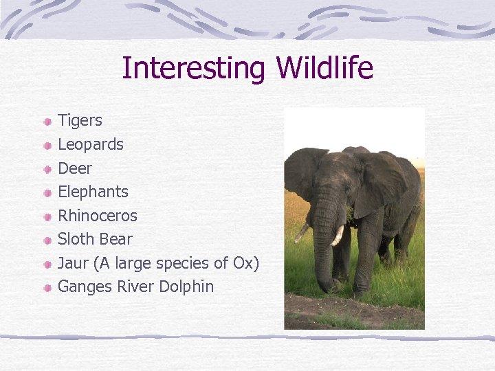 Interesting Wildlife Tigers Leopards Deer Elephants Rhinoceros Sloth Bear Jaur (A large species of