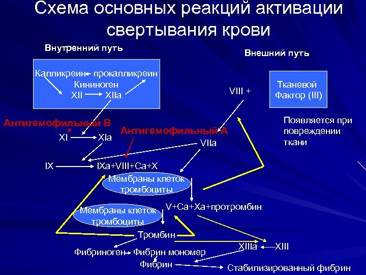 Схема основных реакций активации свертывания крови Внутренний путь Внешний путь Калликреин прокалликреин Кининоген XIIa