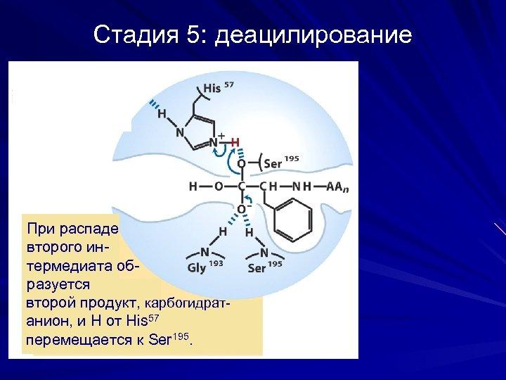 Стадия 5: деацилирование При распаде второго интермедиата образуется второй продукт, карбогидратанион, и Н от
