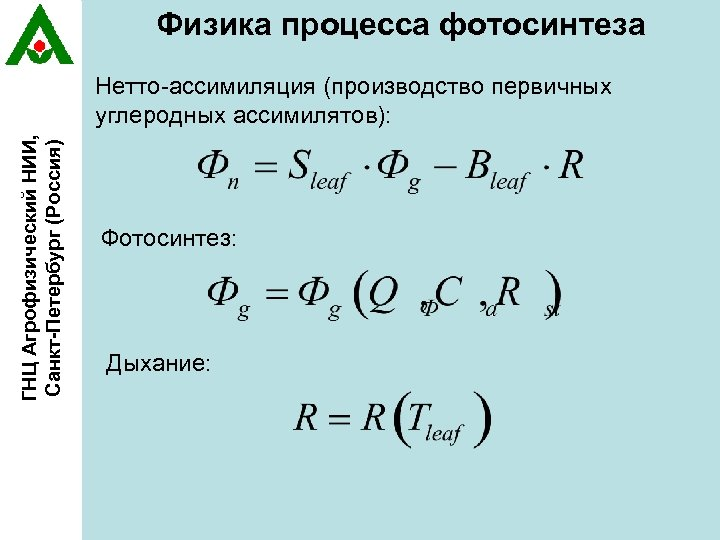 Физика процесса фотосинтеза ГНЦ Агрофизический НИИ, Санкт-Петербург (Россия) Нетто-ассимиляция (производство первичных углеродных ассимилятов): Фотосинтез:
