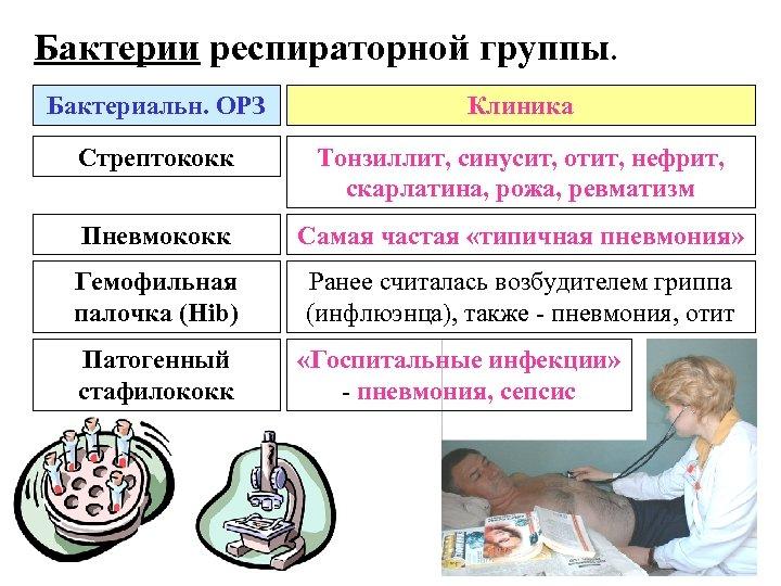 Бактерии респираторной группы. Бактериальн. ОРЗ Клиника Стрептококк Тонзиллит, синусит, отит, нефрит, скарлатина, рожа, ревматизм