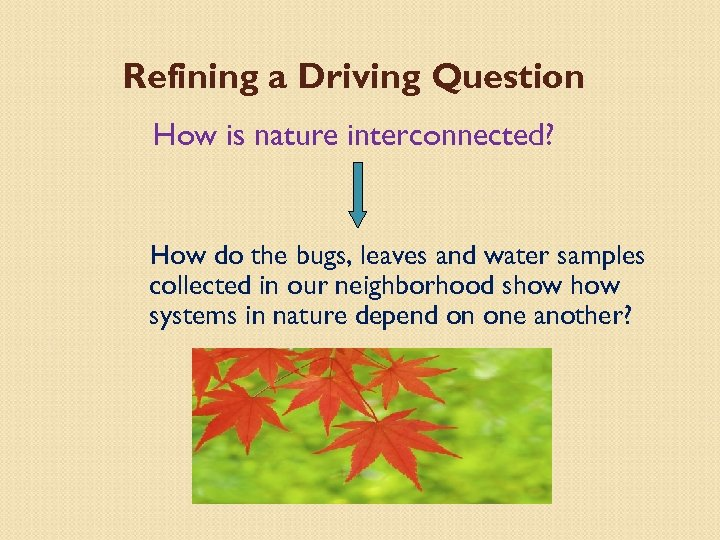 Refining a Driving Question How is nature interconnected? How do the bugs, leaves and