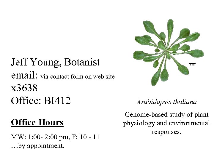 Jeff Young, Botanist email: via contact form on web site x 3638 Office: BI