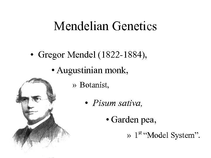 Mendelian Genetics • Gregor Mendel (1822 -1884), • Augustinian monk, » Botanist, • Pisum