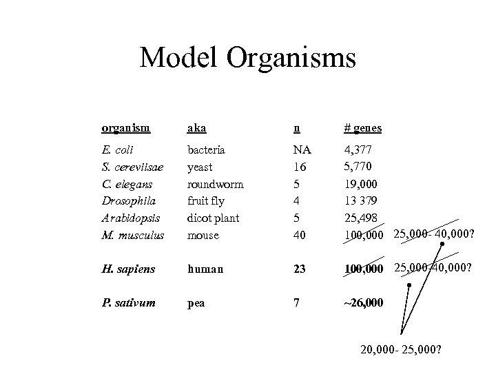 Model Organisms organism aka n # genes E. coli S. cereviisae C. elegans Drosophila