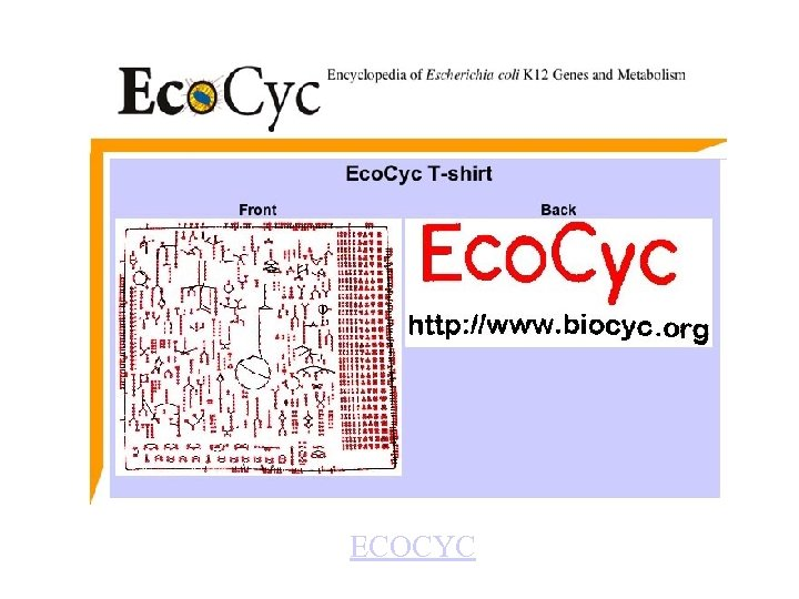 General Cell Function ECOCYC