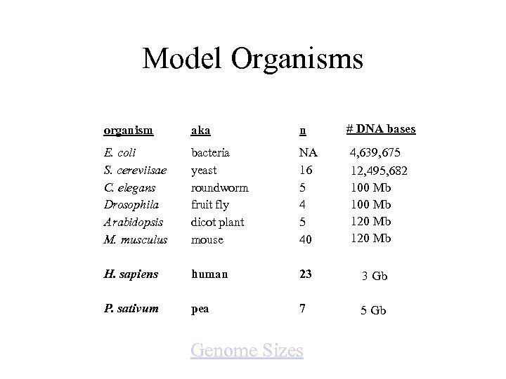 Model Organisms organism aka n # DNA bases E. coli S. cereviisae C. elegans