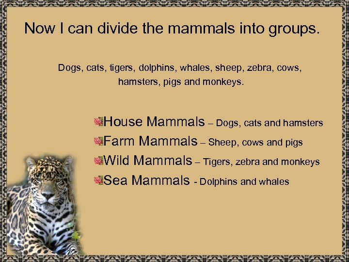 Now I can divide the mammals into groups. Dogs, cats, tigers, dolphins, whales, sheep,