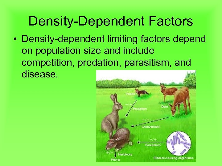 Density-Dependent Factors • Density-dependent limiting factors depend on population size and include competition, predation,