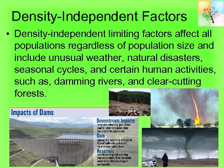 Density-Independent Factors • Density-independent limiting factors affect all populations regardless of population size and