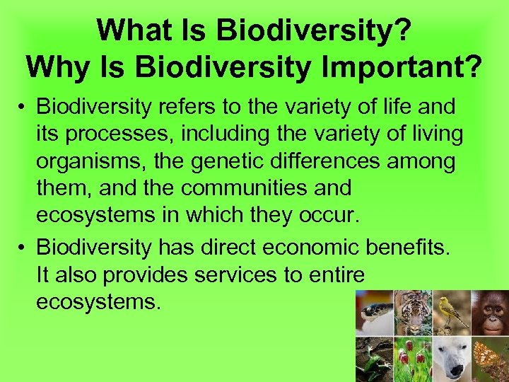 What Is Biodiversity? Why Is Biodiversity Important? • Biodiversity refers to the variety of