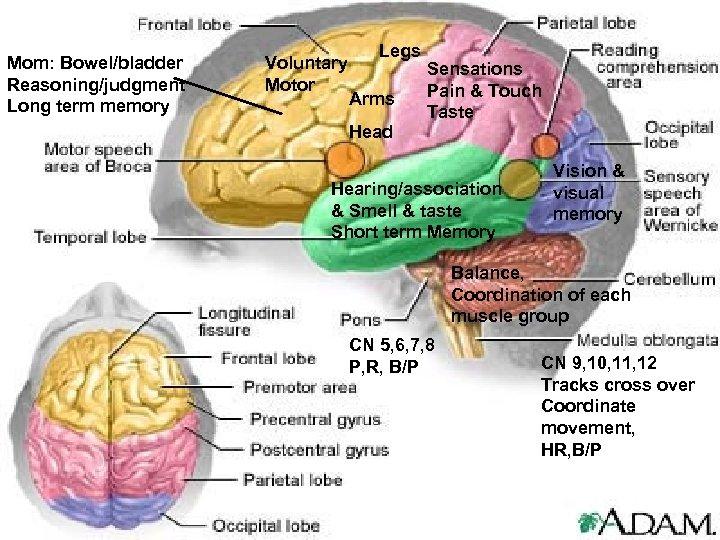 Mom: Bowel/bladder Reasoning/judgment Long term memory Voluntary Motor Legs Arms Head Sensations Pain &