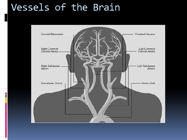 Vessels of the Brain