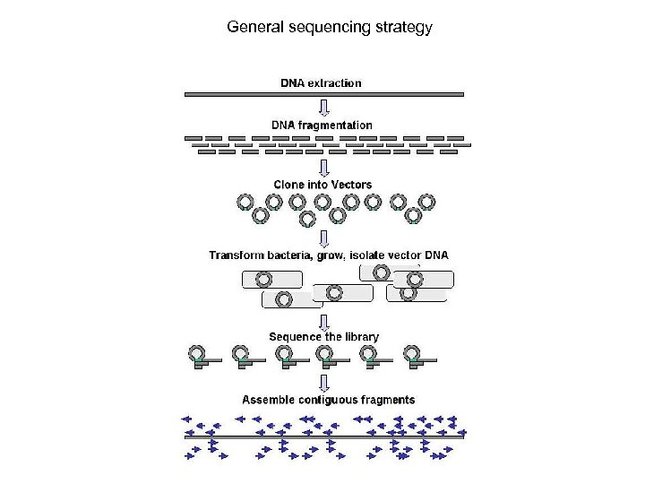 General sequencing strategy
