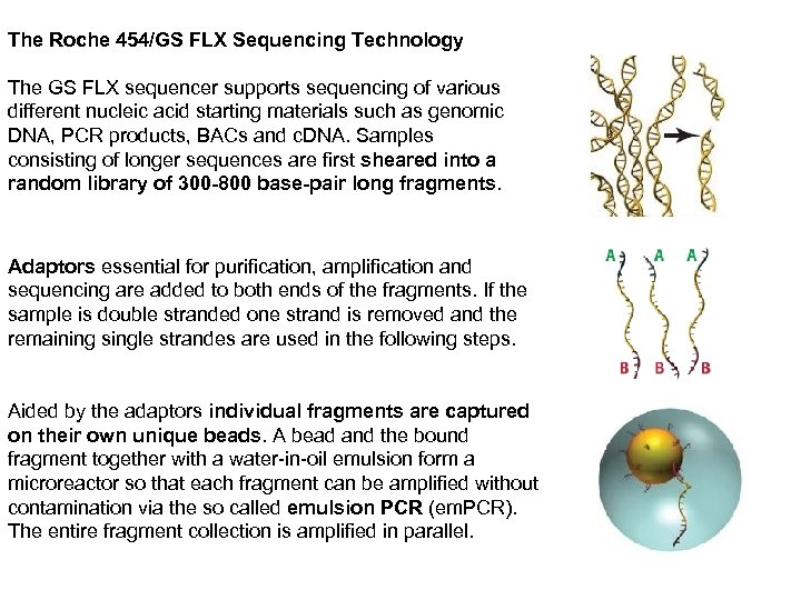 The Roche 454/GS FLX Sequencing Technology The GS FLX sequencer supports sequencing of various