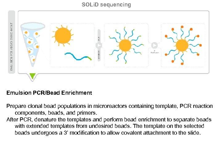 SOLi. D sequencing Emulsion PCR/Bead Enrichment Prepare clonal bead populations in microreactors containing template,