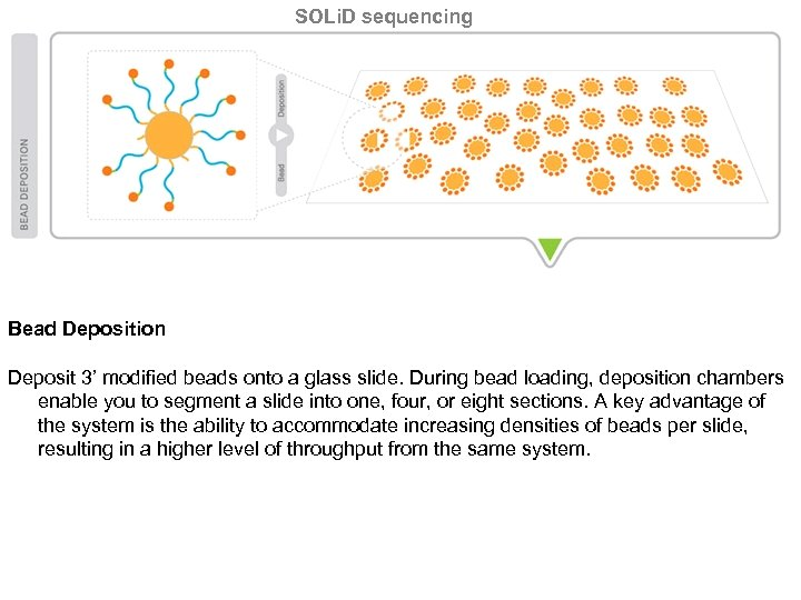 SOLi. D sequencing Bead Deposition Deposit 3' modified beads onto a glass slide. During