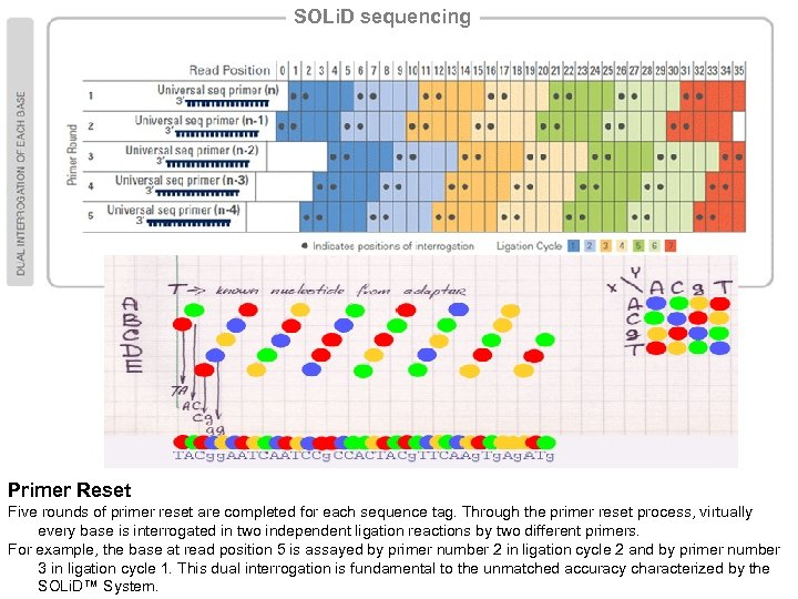 SOLi. D sequencing Primer Reset Five rounds of primer reset are completed for each