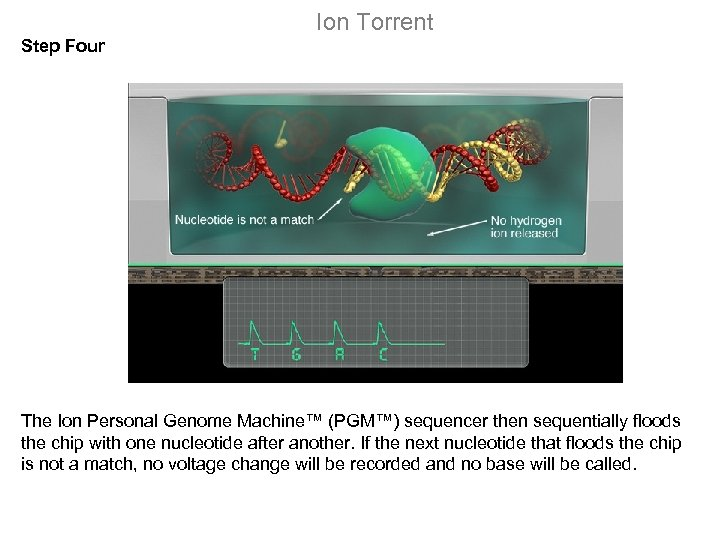 Ion Torrent Step Four The Ion Personal Genome Machine™ (PGM™) sequencer then sequentially floods