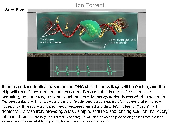Step Five Ion Torrent If there are two identical bases on the DNA strand,