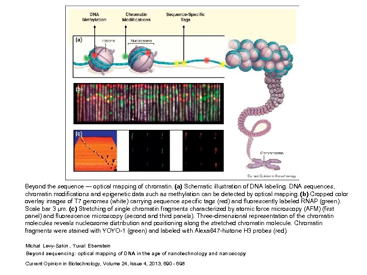 Beyond the sequence — optical mapping of chromatin. (a) Schematic illustration of DNA labeling.