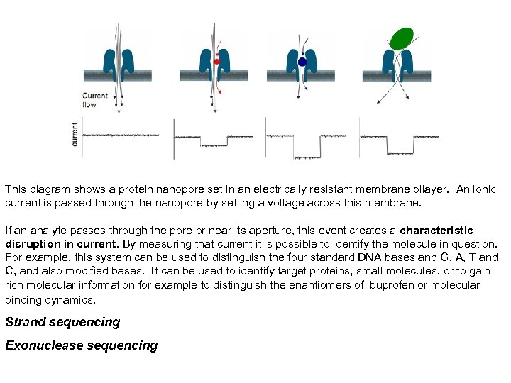This diagram shows a protein nanopore set in an electrically resistant membrane bilayer. An