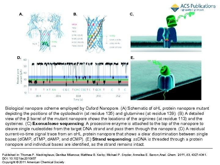Biological nanopore scheme employed by Oxford Nanopore. (A) Schematic of αHL protein nanopore mutant