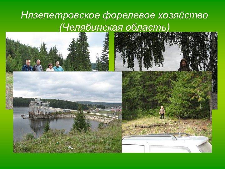 Нязепетровское форелевое хозяйство (Челябинская область)