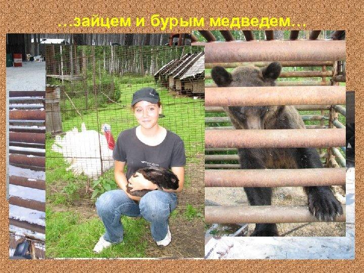 …зайцем и бурым медведем…