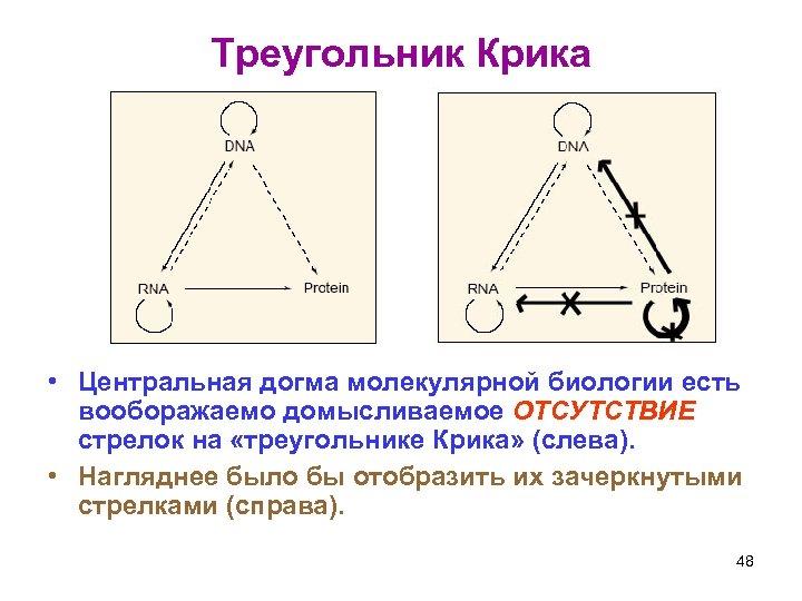 Треугольник Крика • Центральная догма молекулярной биологии есть вооборажаемо домысливаемое ОТСУТСТВИЕ стрелок на «треугольнике