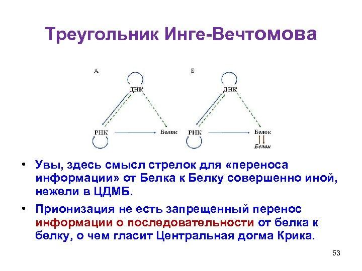Треугольник Инге-Вечтомова • Увы, здесь смысл стрелок для «переноса информации» от Белка к Белку