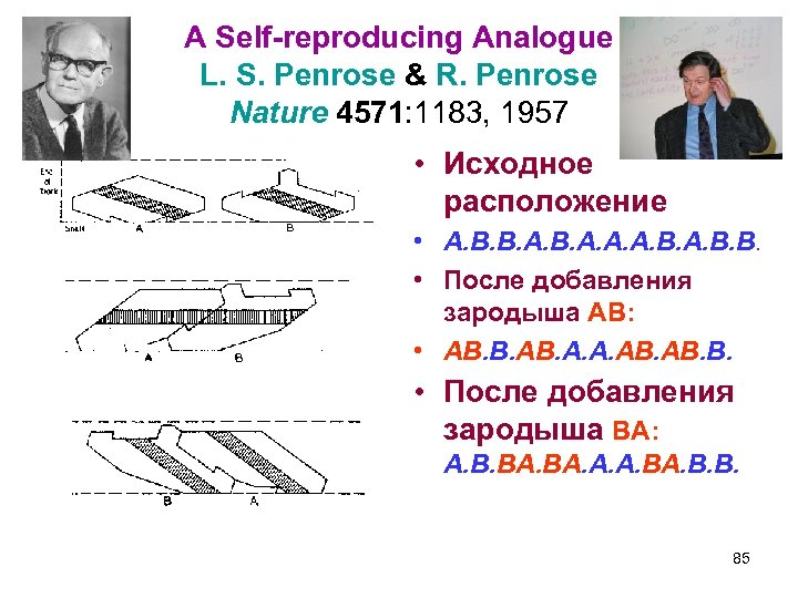A Self-reproducing Analogue L. S. Penrose & R. Penrose Nature 4571: 1183, 1957 •