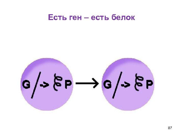 Есть ген – есть белок 87
