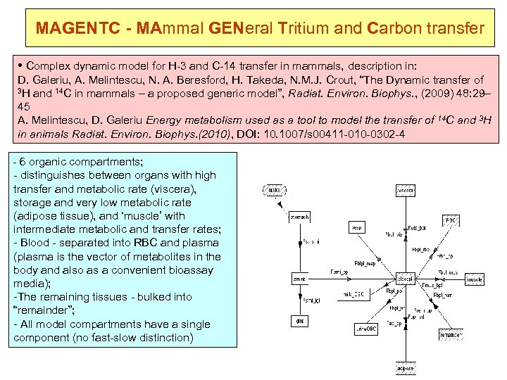 MAGENTC - MAmmal GENeral Tritium and Carbon transfer • Complex dynamic model for H-3