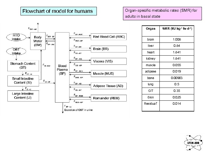 Flowchart of model for humans Organ-specific metabolic rates (SMR) for adults in basal state