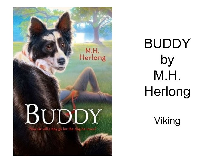 BUDDY by M. H. Herlong Viking