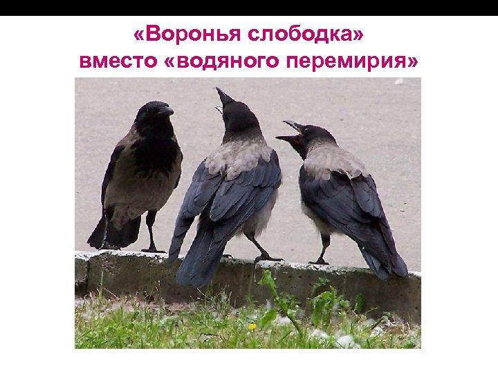 «Воронья слободка» вместо «водяного перемирия»