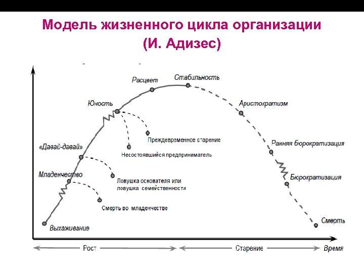 Модель жизненного цикла организации (И. Адизес)