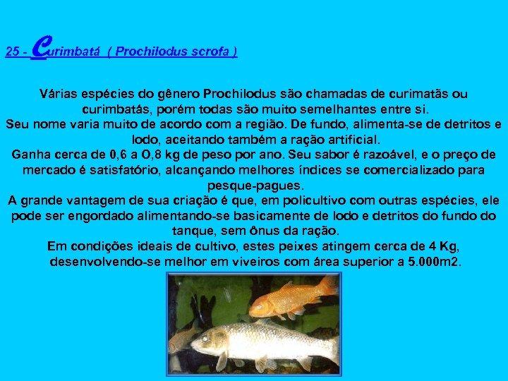25 - Curimbatá ( Prochilodus scrofa ) Várias espécies do gênero Prochilodus são chamadas