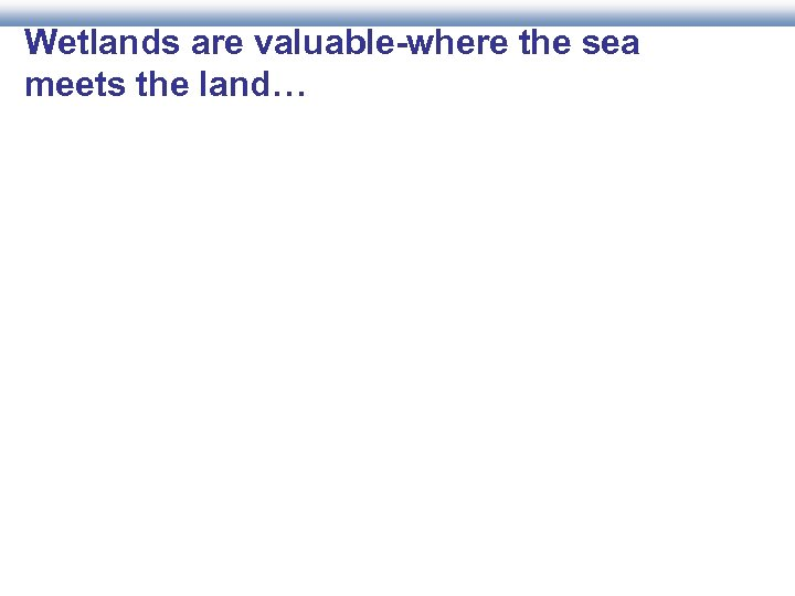 Wetlands are valuable-where the sea meets the land…