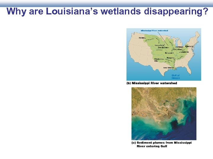 Why are Louisiana's wetlands disappearing?