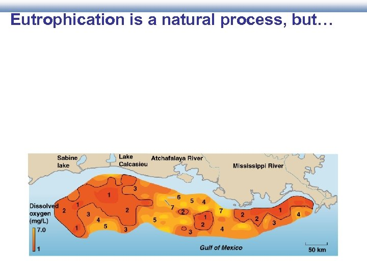 Eutrophication is a natural process, but…