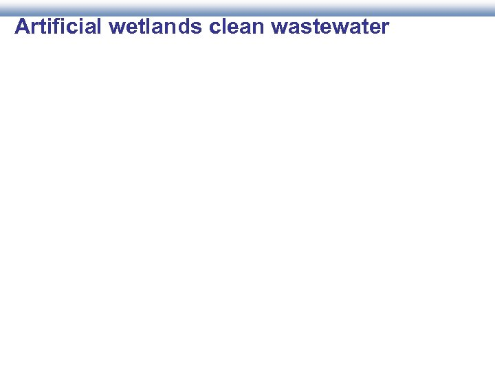 Artificial wetlands clean wastewater